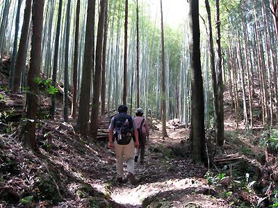 熊野古道中辺路・曼荼羅の道を歩くガイドと一人旅男性