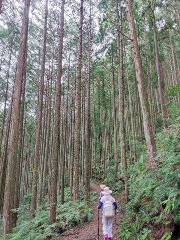 熊野古道中辺路を歩くエコツアー参加者