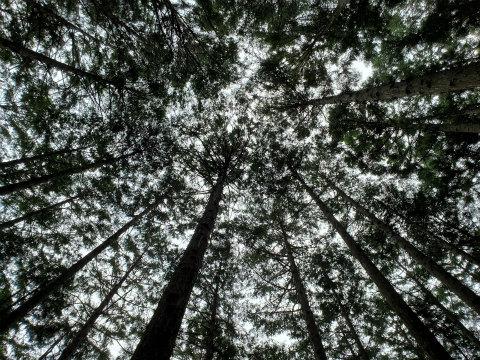 熊野古道中辺路の森林